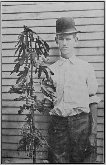 texas-fig-farmer_1910_high-shrink